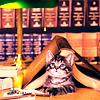 kt_dionys: Study cat