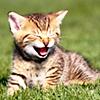 kt_dionys: Hee cat
