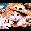 kt_dionys: Pretty cat
