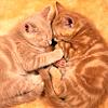 kt_dionys: friend cat