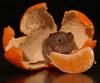 Мыша в апельсинах