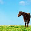 horse field