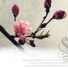phlourish_icons userpic