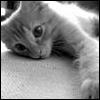 Catherine [userpic]