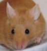 mousewarrior userpic