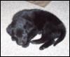 sleeping Pip
