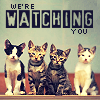 A pink plastic crypt that fits in your palm: Cats [We're watching you!]
