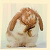 Giorgia: bunnywah