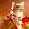 Kitties // present