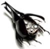 jitteryladybug userpic
