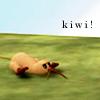elexandros: kiwi!