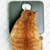 tubbyorngetabby userpic
