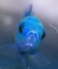 songofthejays userpic