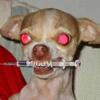 Dog/Needle
