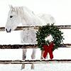 whitehorse41 userpic