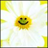 smilingDaisy