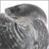 filia_seal userpic