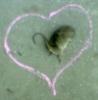 feelaretta userpic