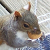 SammyD: Nuts