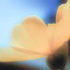 iniri: flower