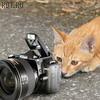 Kitty_Nikon