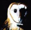 Sarah: Owl2