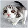 vanita: Cat - scared