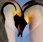 lorettakay: Penguin Love