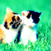 ...Drama Queen: Cats