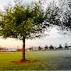Real life Tree