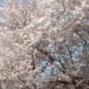 whiteraven1606 userpic