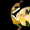 tibbils userpic