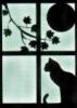 blackpoetcat
