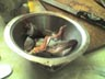 byanke: fish