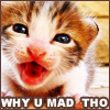 Kitty//Why u mad tho?