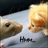 rat kitten