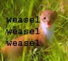 Miche: weasel by beth47
