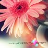 Alterna: цветочек