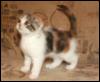 кошка Жанна