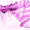 spiffinglass userpic