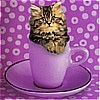 cat- kitty in a cup