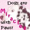 [dog] Miracles