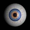 seeing, eye
