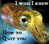 Queen of Peacocks: Brokeback Squid