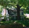 house&tree