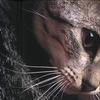 aniok userpic