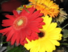 solarraediation userpic
