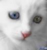 troitsa1: кот белый