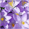 purplefields userpic