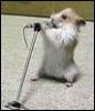 поющая мышь